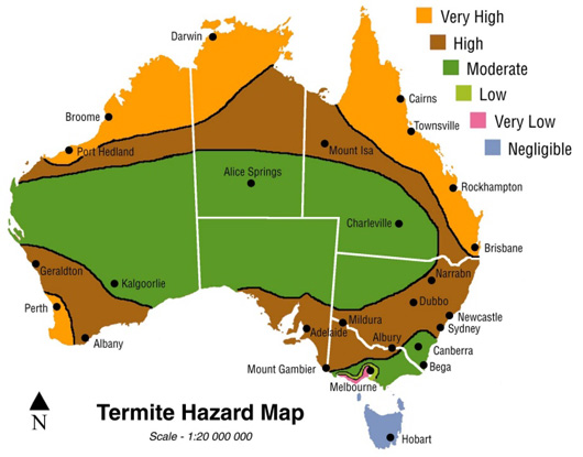 Termite Infestation Statistics for Queensland and Australia